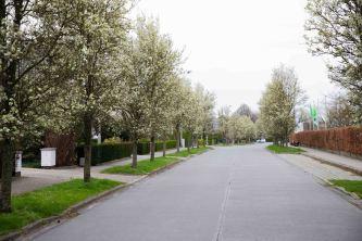 bomen bloeien